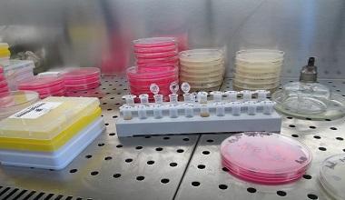 laboratory-380x220