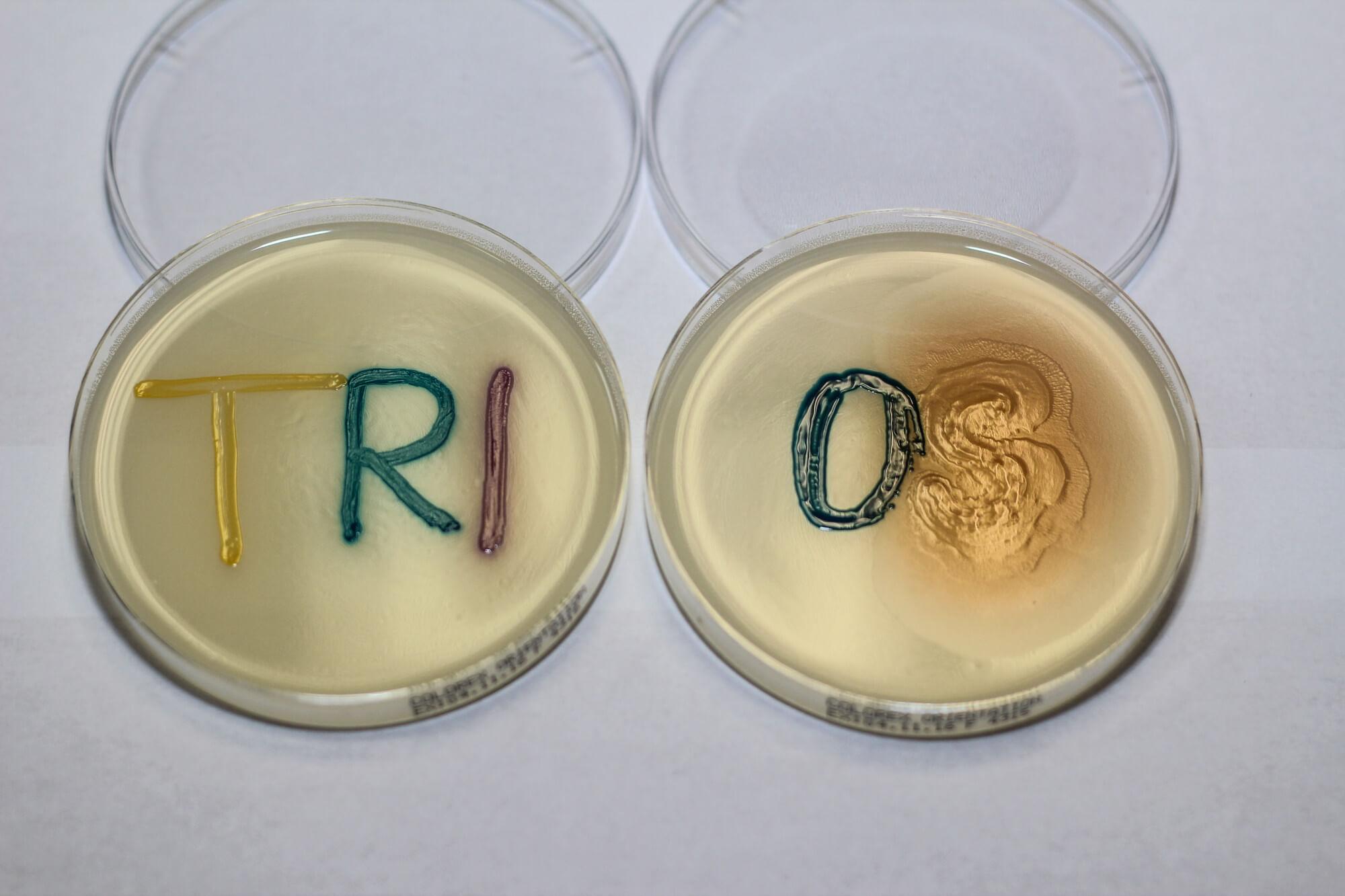 TRIOS-2